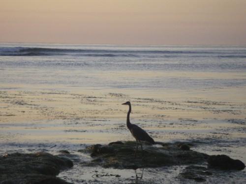 Heron stalking