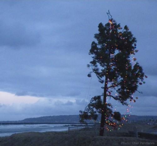 Ocean Beach Christmas Tree, Merry Christmas!