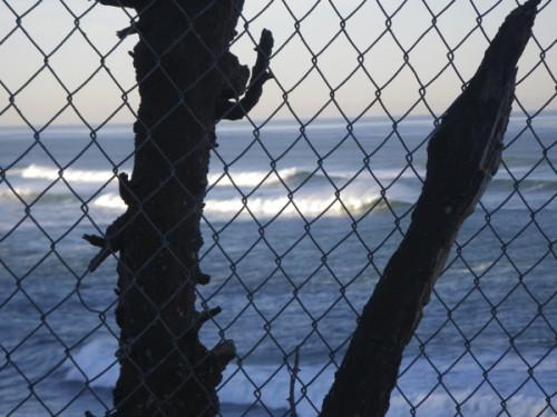 Fenced fruit