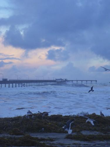 Sunrise and shorebirds over a sea of white