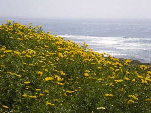 Spring flowers and the sea